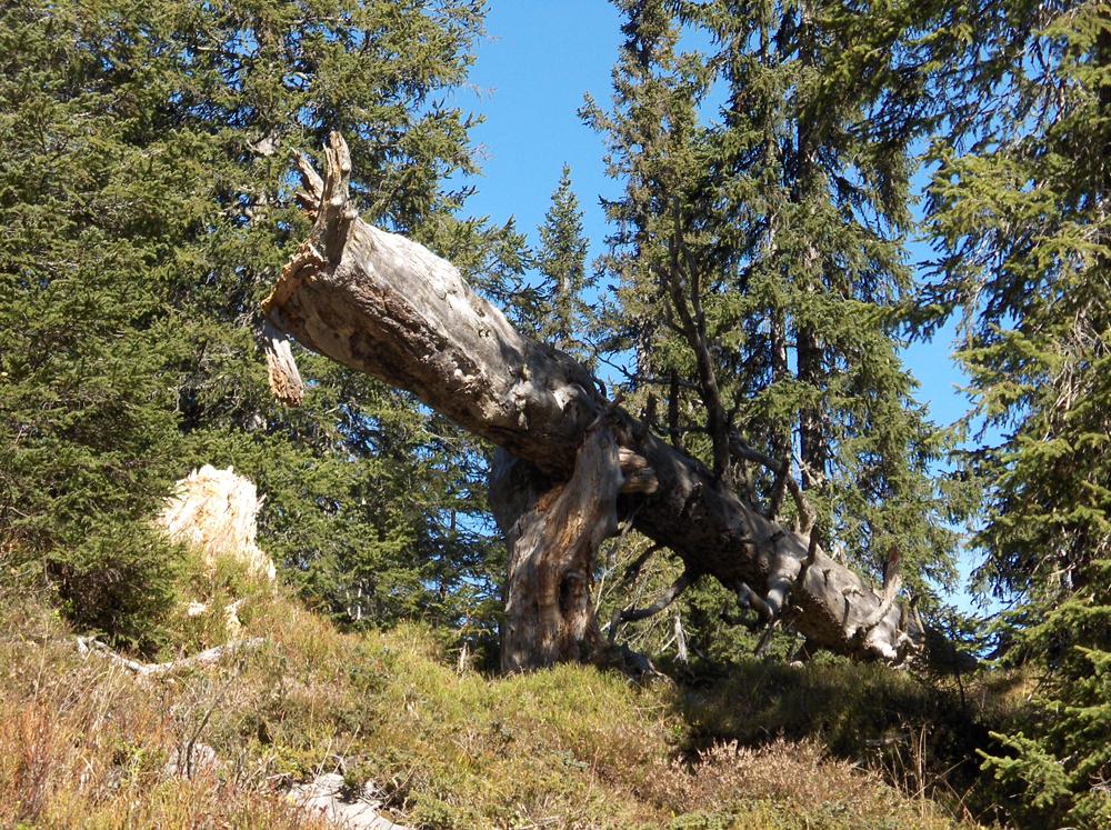 Leben und Sterben im Gebirgswald