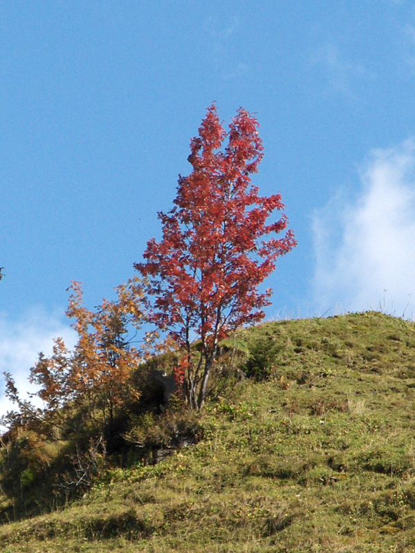 Roter Oktober