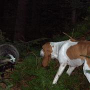 Chilko hat keine Angst